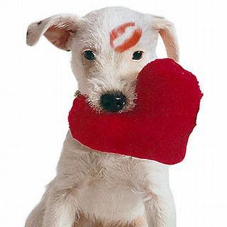 PetSimple_ILoveYouHeartToy_080206_ssv.jpg
