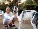 big-dogss.jpg