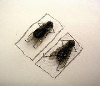 dead_flies_03.jpg