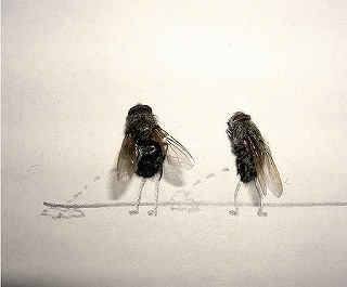 dead_flies_art_02.jpg
