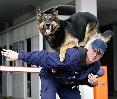 police_dog.jpg