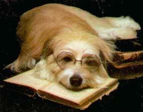 smart_dog.jpg
