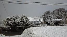 20100113_yuki_1.jpg