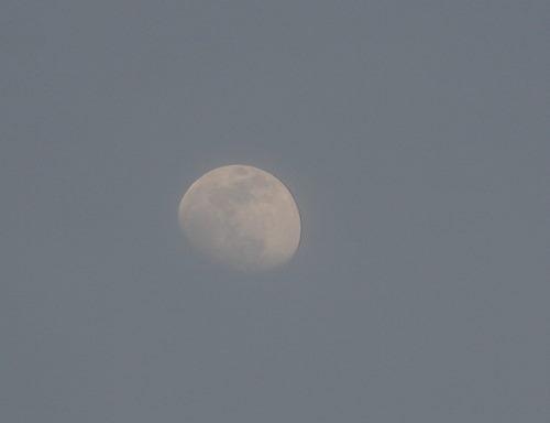 12日の月