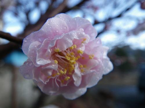 花香実35の1