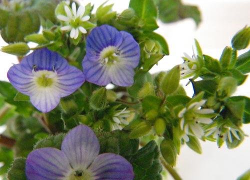 野辺の花35の2