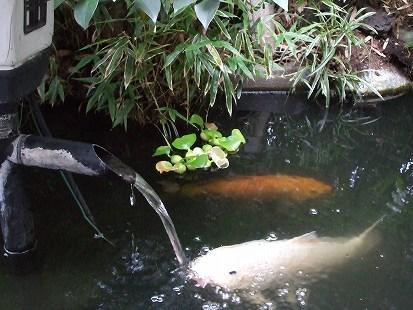 金魚と鈴ちゃん