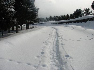 2月16日散歩道