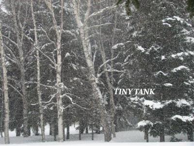 2月16日吹雪