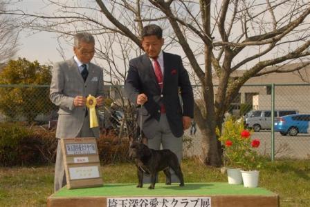 埼玉深谷愛犬クラブ展2