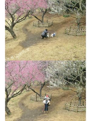 公園 梅2