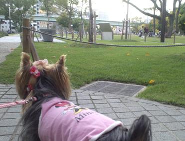 中ノ島公園。