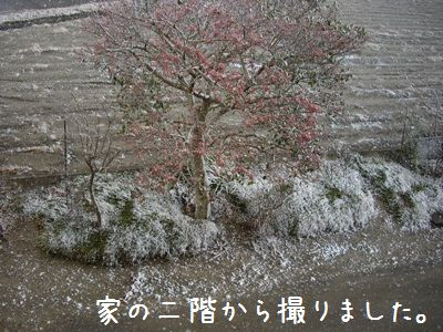 雪やこんこ1