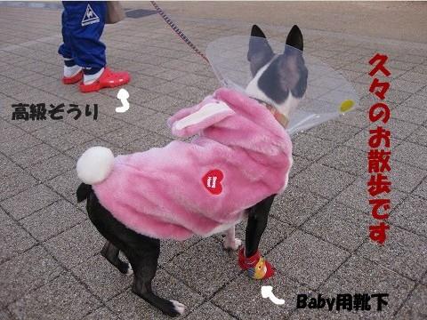 ?駒子散歩