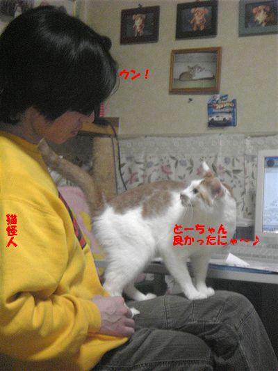 猫怪人のコメント