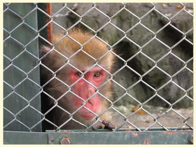 小田原城の猿