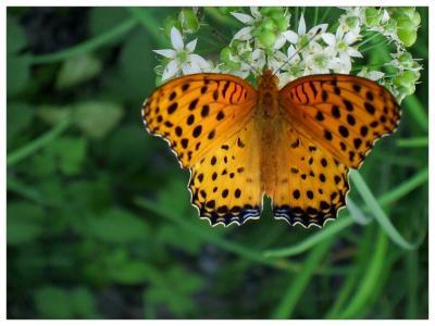 Lonly Butterfly
