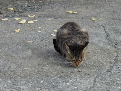 ポテトチップと猫