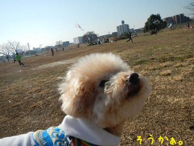 4_20130201150247.jpg
