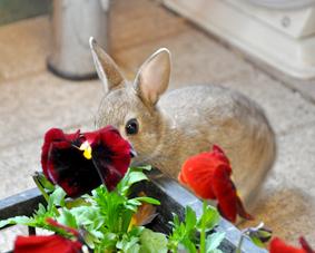 子ウサギ_03