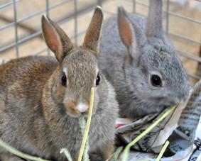 子ウサギ_01