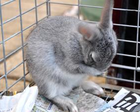 子ウサギ_02