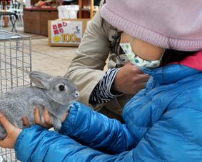 ヒルズ縁日_ウサギと触れ合い_01