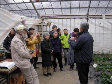 イチゴ栽培3