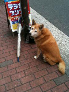 待ち犬5-2