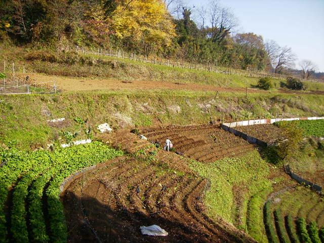 初冬の野菜畑67