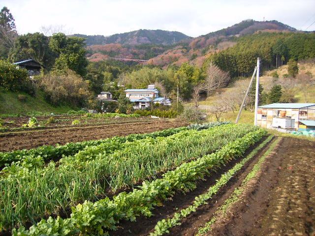 野菜畑24