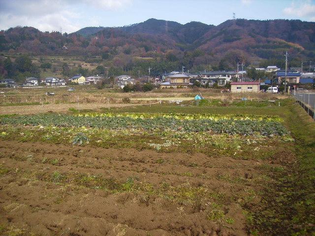 野菜畑66