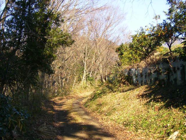 冬の山道007