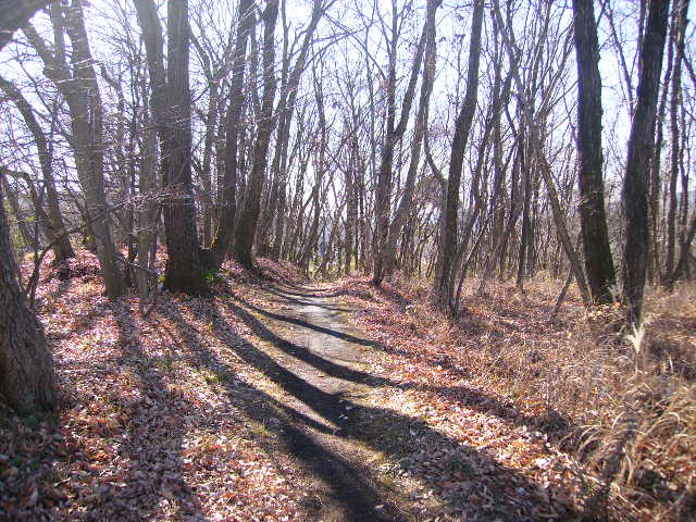 冬木の遊歩道20