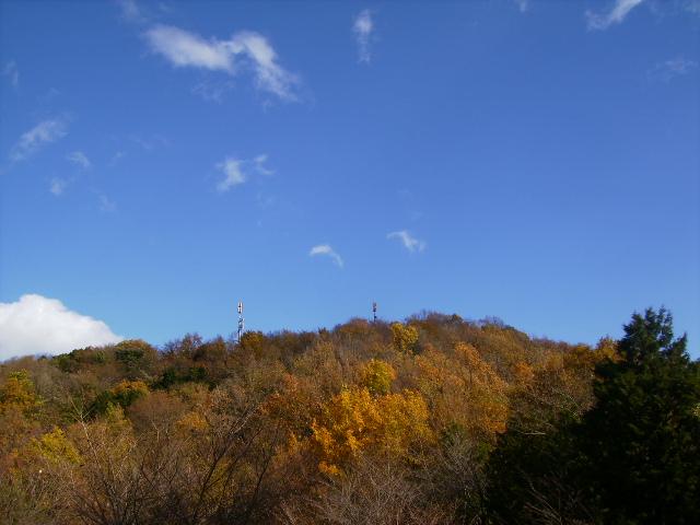 権現山の黄葉138