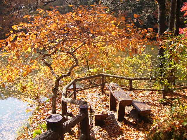 黄葉のベンチ186