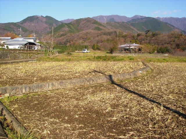 初冬の田んぼ39