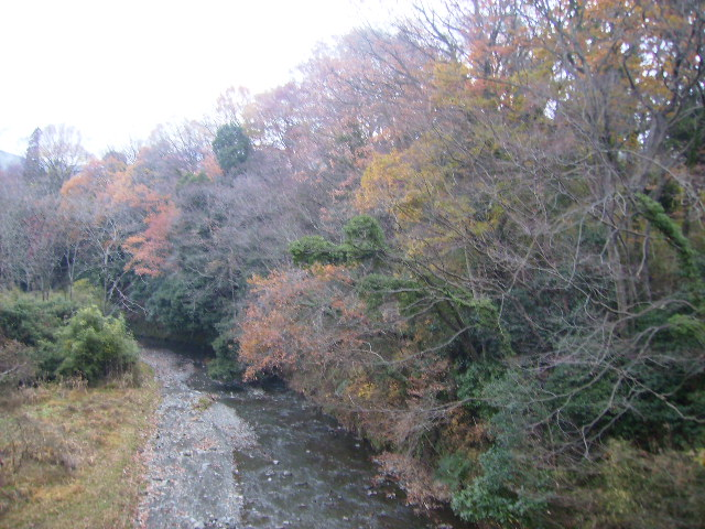 冬木の葛葉川06