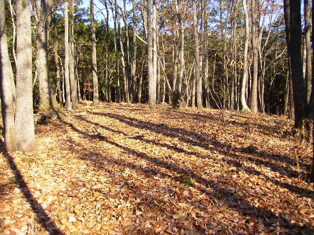 落葉の林45