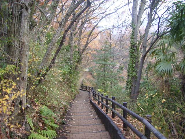 冬木の階段01