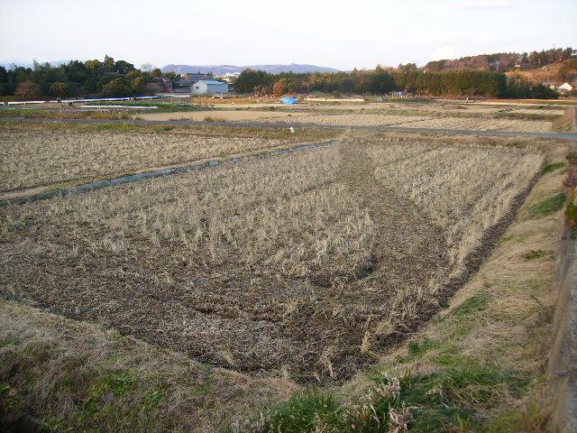 冬の田んぼ19