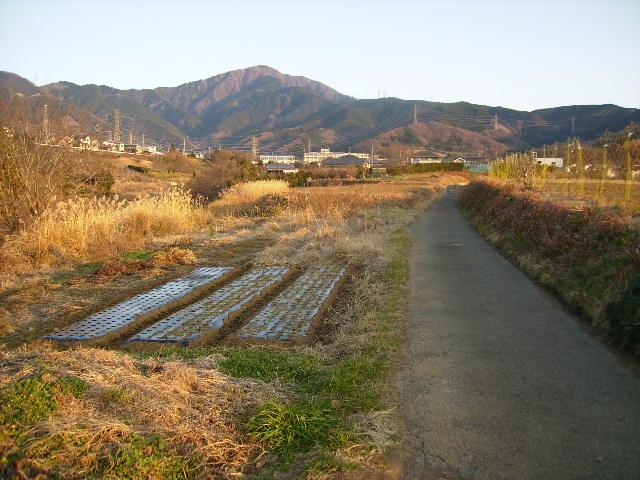 初冬の坂本古道42