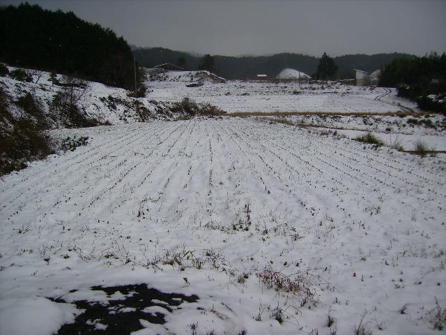 雪の田んぼ125