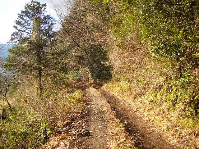 冬木の林道314