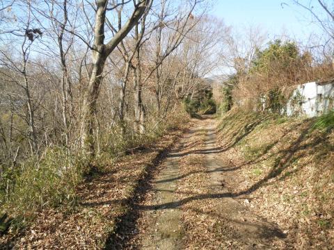 枯木の農道11