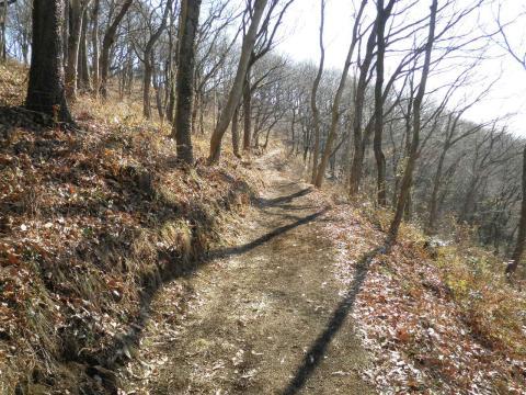 冬木の周遊の山道53