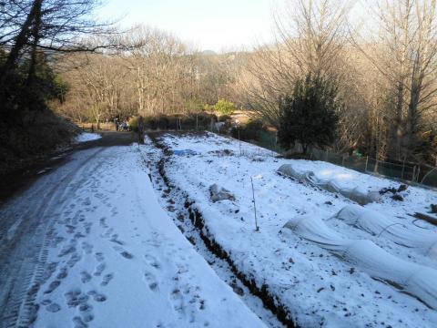 雪の畑12