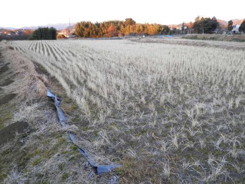 冬の田んぼ10