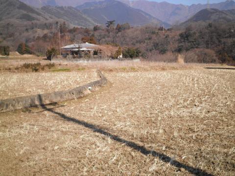 冬の田んぼ12