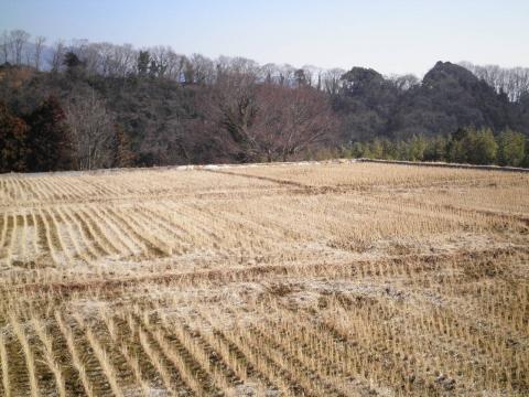 冬の田んぼ15